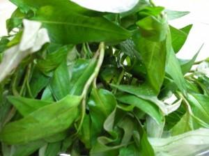 Thu nhỏ lỗ chân lông bằng rau răm